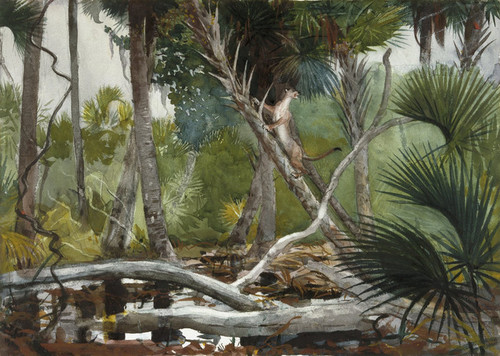 Art Prints of In the Jungle, Florida by Winslow Homer