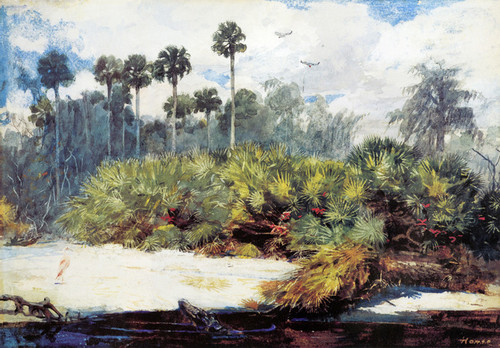 Art Prints of In a Florida Jungle by Winslow Homer