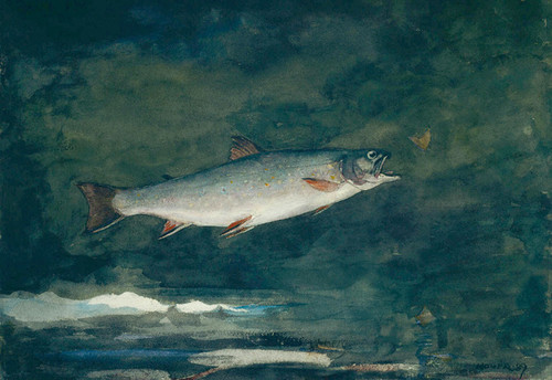 Art Prints of Leaping Trout by Winslow Homer