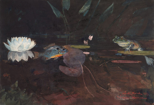 Art Prints of Mink Pond by Winslow Homer