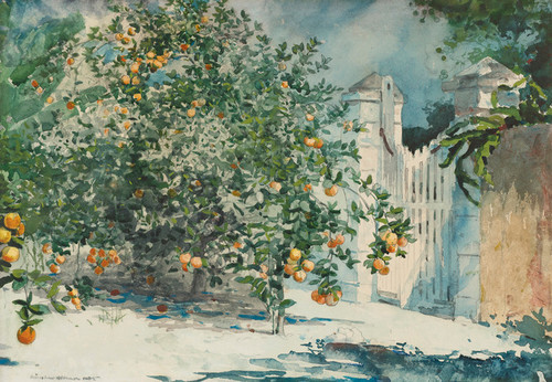 Art Prints of Orange Trees and Gate, Nassau by Winslow Homer