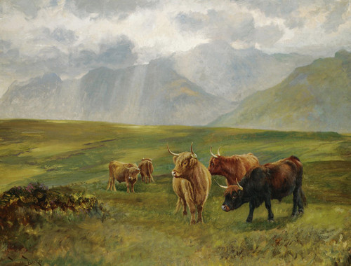 Art Prints of Highland Cattle by Wright Barker