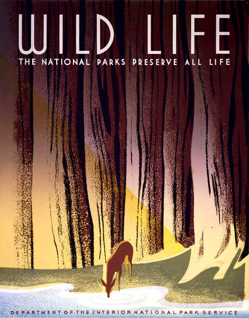Art Prints of Wild Life, National Parks (399124), Travel Poster