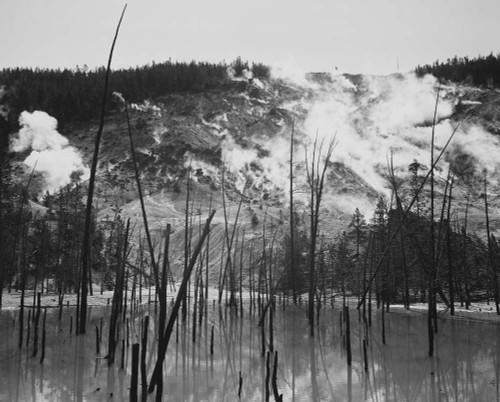 Art prints of Barren tree trunks, Roaring Mountain, Yellowstone National Park, Wyoming