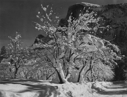 Art prints of Half Dome, Apple Orchard, Yosemite, California by Ansel Adams