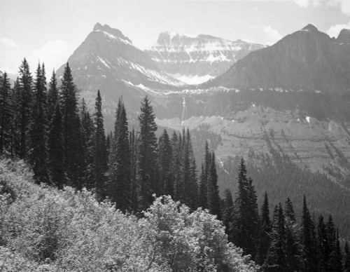 Art prints of Trees and bushes, mountains in background, Glacier National Park, Montana