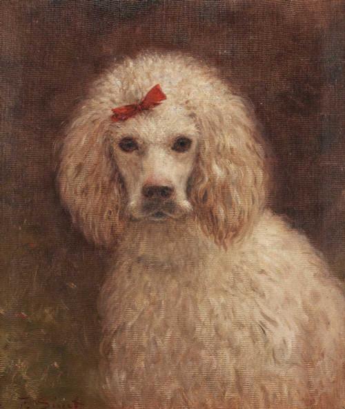 Portrait of the Poodle Widmore Jane Sterling by Ferdinand Sinet