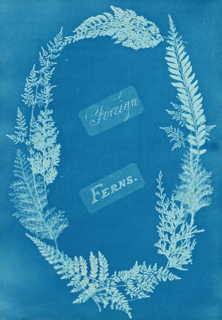 Art prints of Foreign Ferns by Anna Atkins