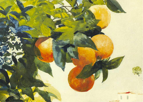 Art prints of Oranges on a Branch by Winslow Homer