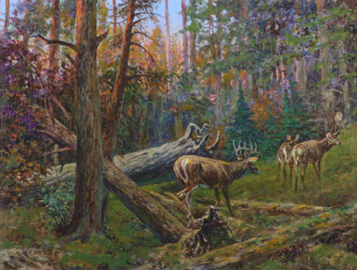 Art prints of Whitetails by Olaf Carl Seltzer