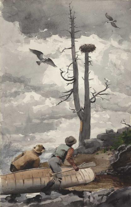 Art prints of Osprey's Nest by Winslow Homer