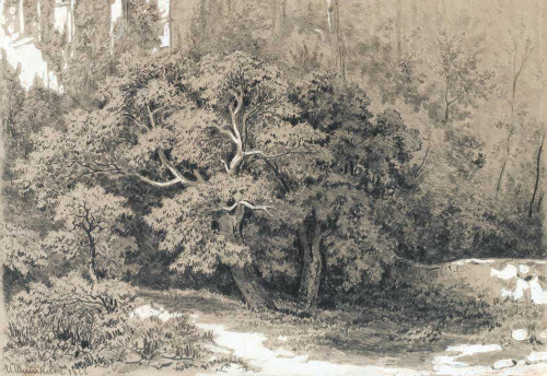 Art prints of Forest Clearing by Ivan Shishkin