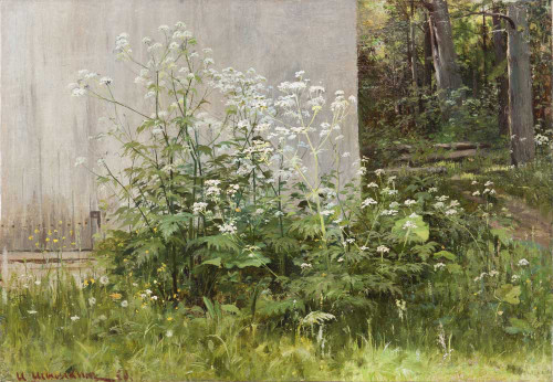 Art prints of Flowers at the Fence by Ivan Shishkin