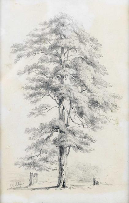 Art prints of Study of a Tree by Ivan Shishkin