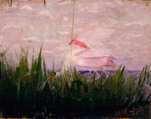 Art prints of Roseate Spoonbill by Abbott H. Thayer