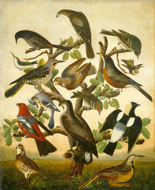 Art Prints of Birds, 1840 by 19th Century American Artist