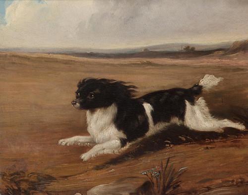 Art Prints of Fidelio, a Spaniel by Abraham Cooper