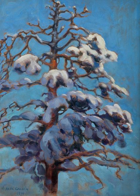 Art Prints of Snowy Pine by Akseli Gallen-Kallela