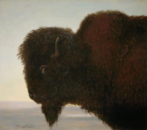 Art Prints of Buffalo Head by Albert Bierstadt
