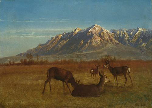 Art Prints of Deer in their Mountain Home by Albert Bierstadt