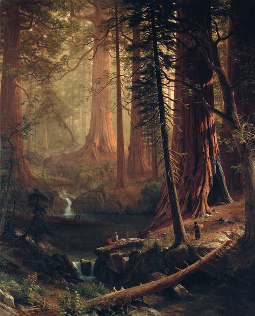 Art Prints of Giant Redwood Trees of California by Albert Bierstadt