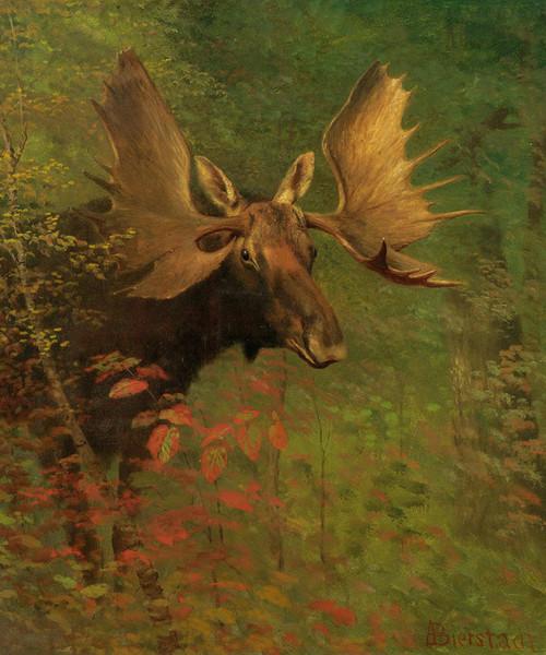 Art Prints of Study of a Moose by Albert Bierstadt