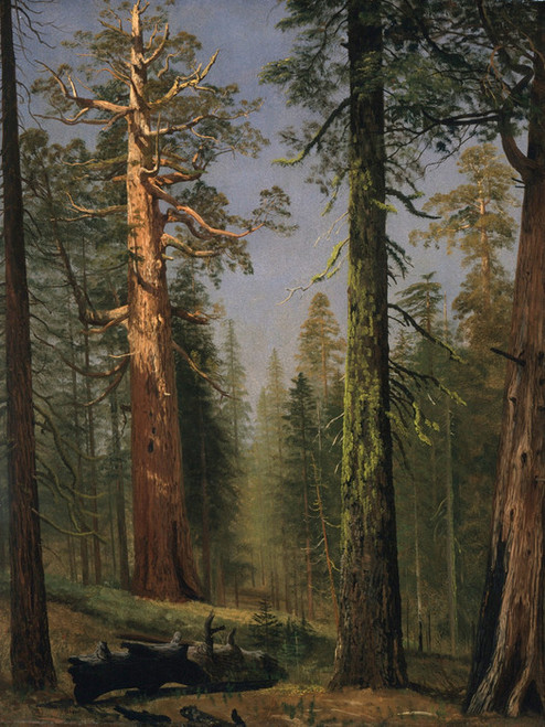 Art Prints of The Grizzly Giant Sequoia by Albert Bierstadt