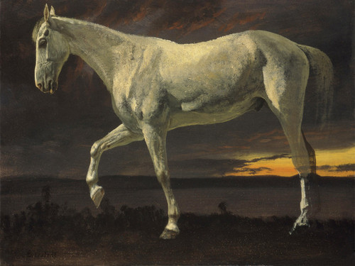 Art Prints of White Horse and Sunset by Albert Bierstadt