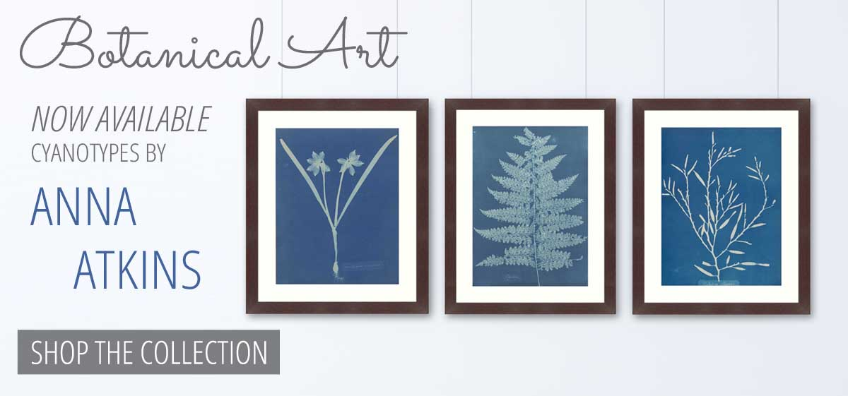 Shop the new Anna Atkins Collection today!