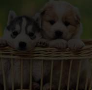 Snuggle Friends