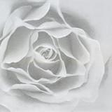 Floral - Rose Silver Napkins 13'' x 13'' - 20pk