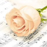 Floral - Classic Rose Napkins 13'' x 13'' - 20pk