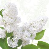 Floral - White Lilac Napkins 13'' x 13'' - 20pk