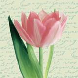 Floral - Tulipa Cream Napkins 13'' x 13'' - 20pk