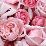 Floral - Charming Roses Napkins 13'' x 13'' - 20pk