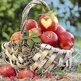 P+D Apple Basket Lunch Napkins, 20pk