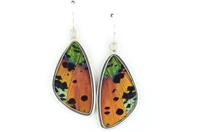 Madagascar Sunset Moth Wing Earrings (Medium)
