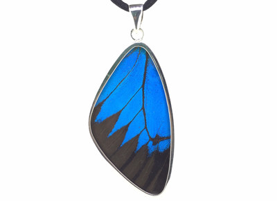 Blue Mountain Butterfly Wing Pendant (X-Large)