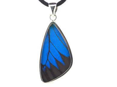 Blue Mountain Butterfly Wing Pendant (Large)
