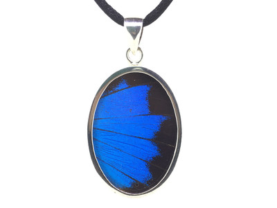 Blue Mountain Butterfly Wing Oval Pendant (Large)