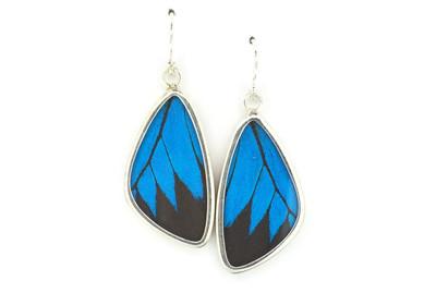 Blue Mountain Butterfly Wing Earrings (Medium)