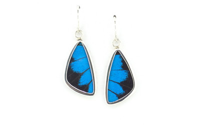 Blue Mountain Butterfly Wing Earrings (Small)