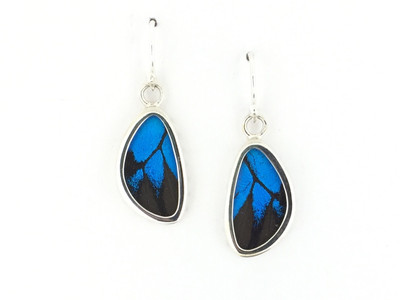 Blue Mountain Butterfly Wing Earrings (X-Small)