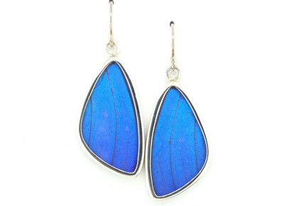 Blue Morpho Butterfly Wing Earrings (Medium)