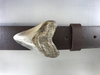 The 2 inch Megalodon sharks tooth belt buckle is cast in white bronze for 1. inch belts