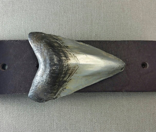 Shark's Tooth buckle for 1.5 inch belts in white bronze