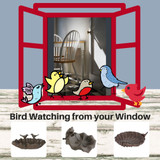 Bird Watching from your window. Attract colorful birds to your deck or patio