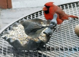 Bird Watching from Your Window & Caring for Your Cast Iron Bird Feeder