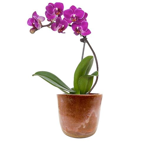 Orchid Pot / Firebox Studios