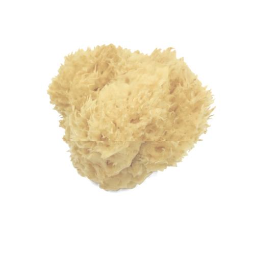 Mediterranean Wool Sponge